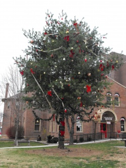 County Christmas tree becomes main complaint on McCulloch's first day