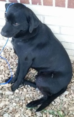 Dixon police seek felony charges against unknown assailant who killed dog with an arrow